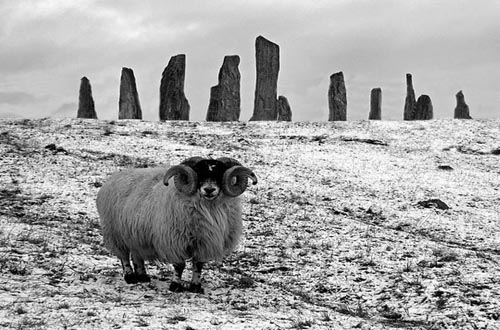 callanish-stone-ring-and-ram-500