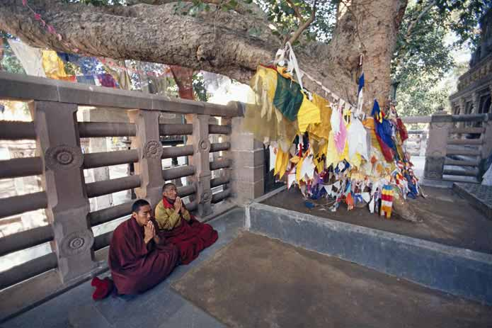 Buddhist Monks at Bodhi Tree (The site of Buddha's enlightenment)
