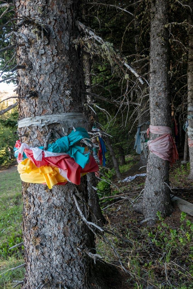 Marques de prière en tissu sur les arbres, Chief Mountain