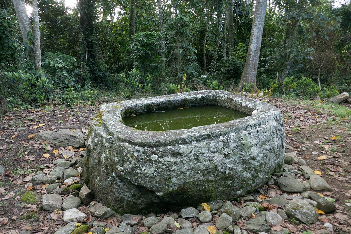 Watulumu kalamba près du village de Tamadue, Napu Valley