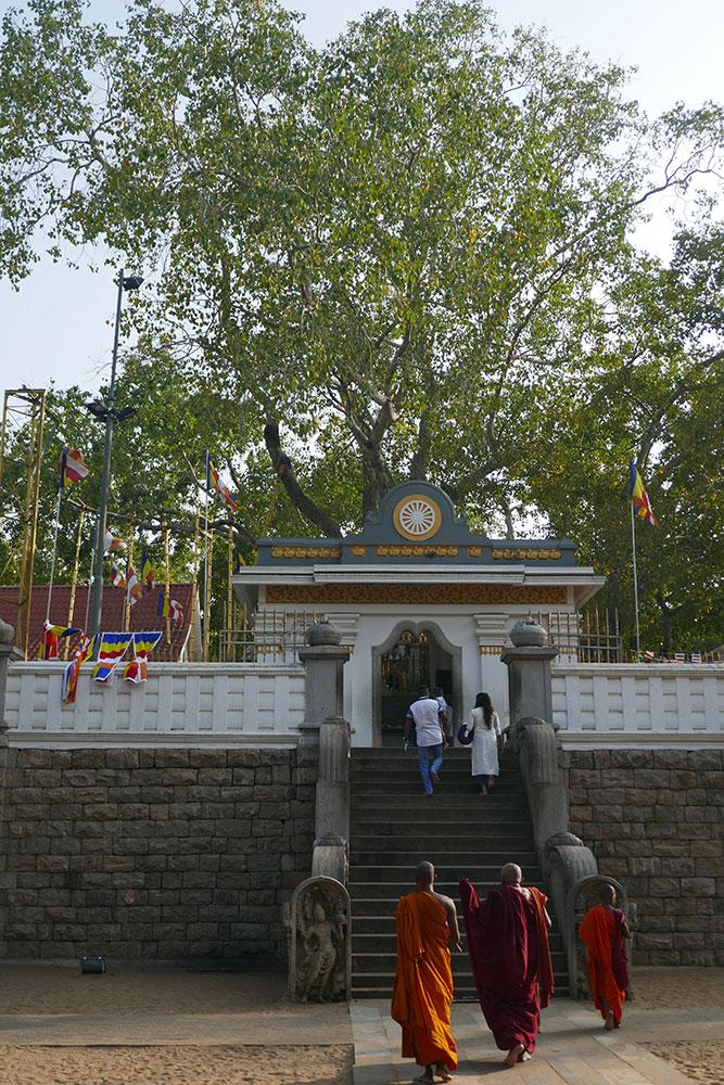 Sri Maha Bodhiya-Baum, Anuradhapura