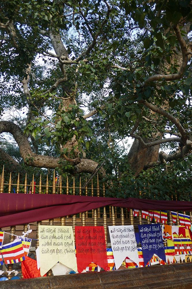 Arbre de Jaya Sri Maha Bodhi, Anuradhapura, Kataragama